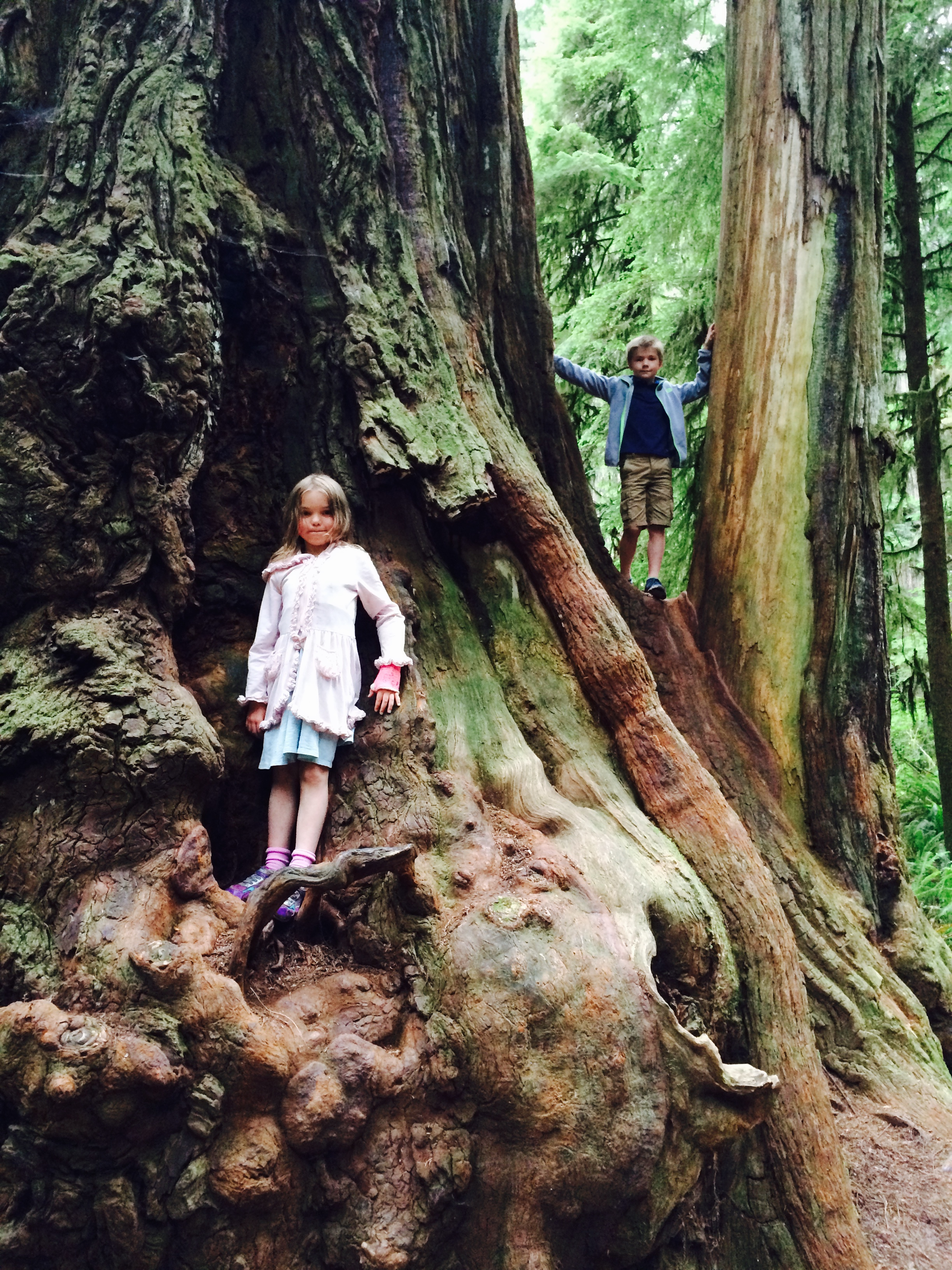 Hiking Jedediah Smith Redwoods State Park
